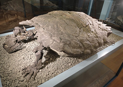 Proganochelys-fossil