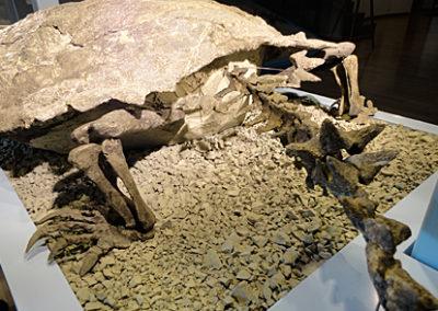 Proganochelys-hinten