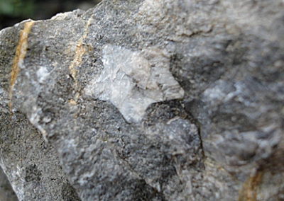 Seelilien-Stern